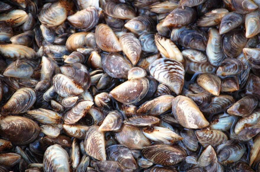 us_fish_and_wildlife_zebra_mussels.jpg