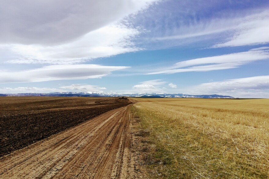 Wheat and barley fields south of Manhattan, Montana, April 27, 2019.