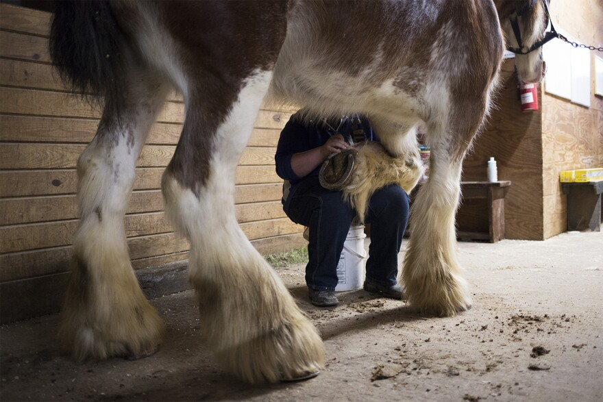 John Carriker works with horses at the St. Louis Carriage Company in downtown St. Louis.