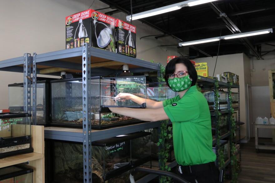 Launa Derickson tending to a reptile inside a glass cage