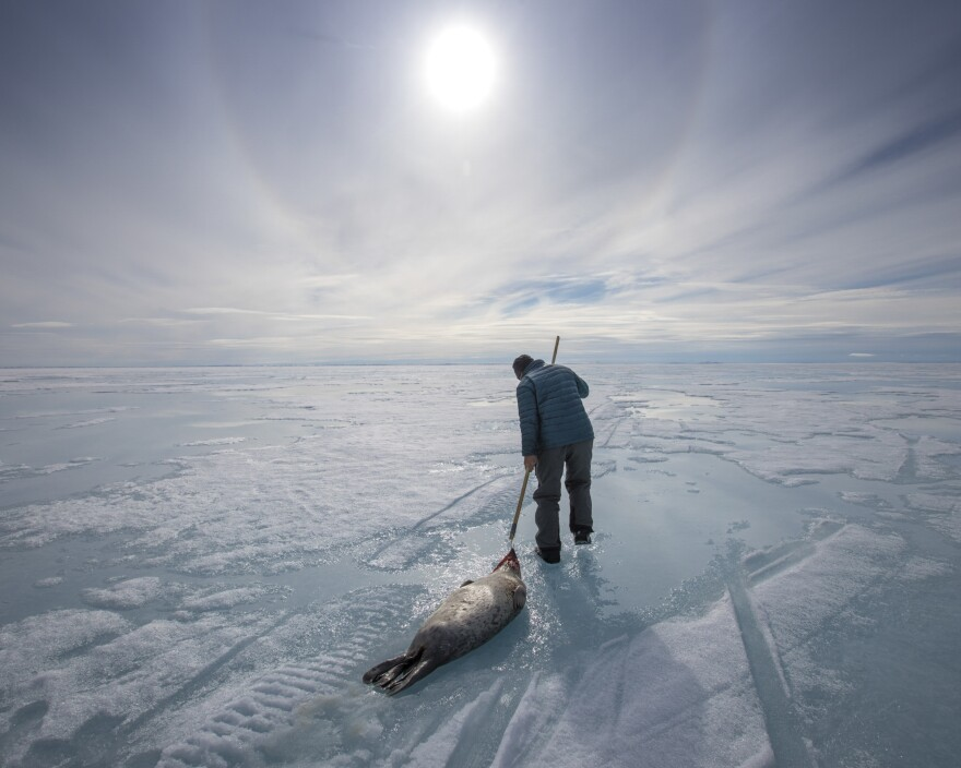 Inuit elder Olayuk Naqitarvik, 74, washes a ringed seal in fresh water on the surface of the sea ice near Nuvukutaak. Raised in a traditional Inuit lifestyle before moving to Arctic Bay, Naqitarvik was traveling on a camping trip with his family, passing on his knowledge of the land and its animals to the younger generations.