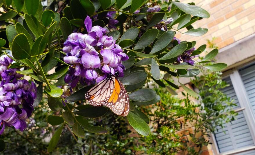 butterfly_0.jpg