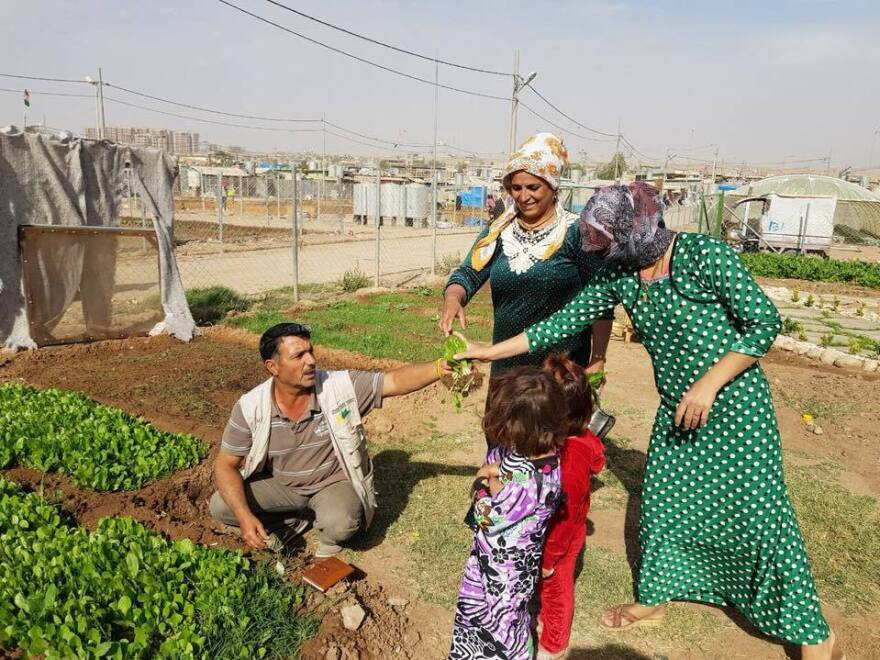 Syrian gardeners at the Domiz refugee camp in northern Iraq share the harvest.