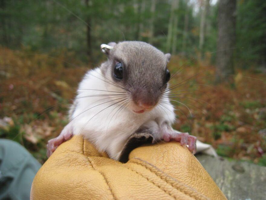 squirrel-close-up-1024x768.jpeg