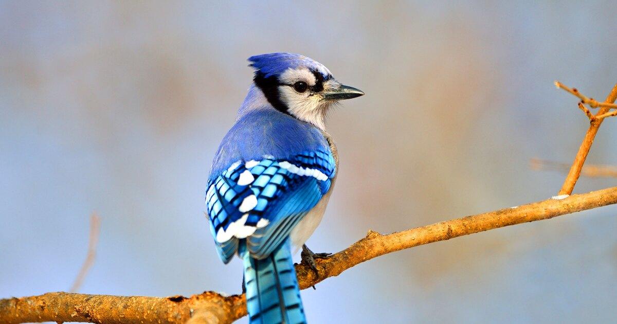 Bird Deaths Linked To Summer Feeders