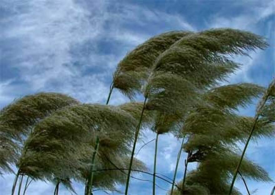 wind-blowing.jpg