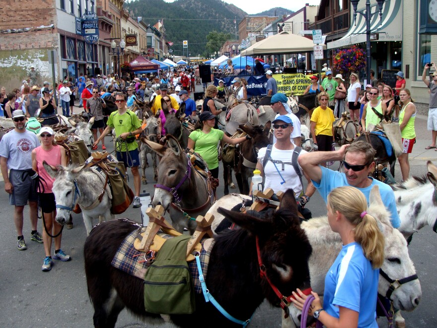 New pack burro racers in Idaho Springs, Colo., compete in this shorter course as they try their hand at the sport.