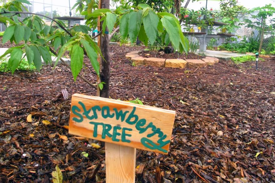 5-4_strawberrytree.jpg
