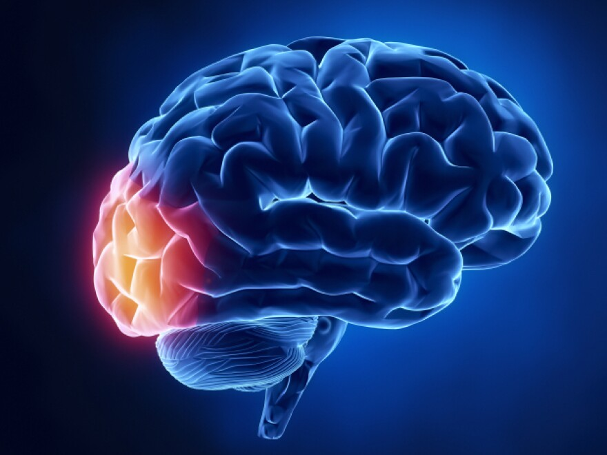 Alexia is a condition often associated with the occipital lobe — the part of the brain that receives visual information.