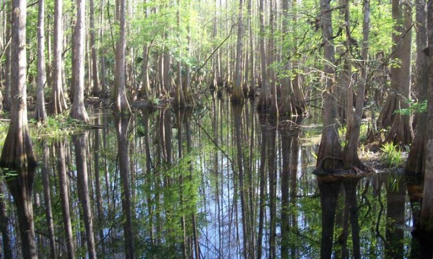 Highland_Hammocks_SP_Swamp_Trail_swamp01.jpg