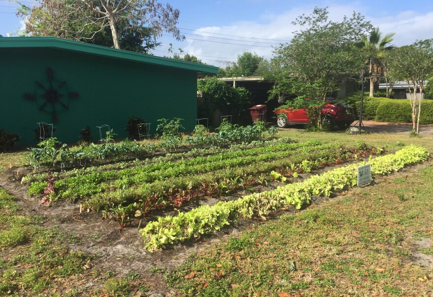 """Rows of greens grow on the front yard of Gary Henderson's house. He's one of a handful of homeowners in Orlando, Fla., who've given up their lawn to Fleet Farming. Once """"you realize that you can eat your lawn, I think it makes a whole lot of sense,"""" Henderson says."""