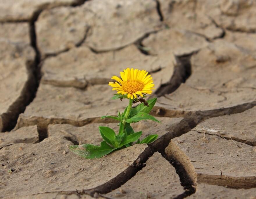 flower_in_desert.jpg