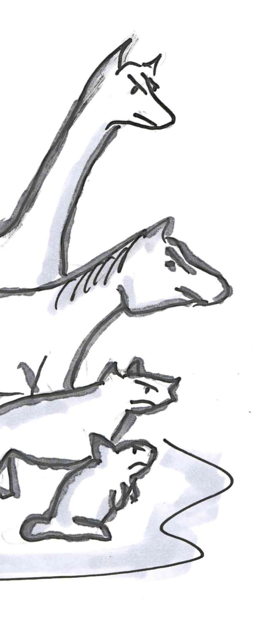 Northern animals