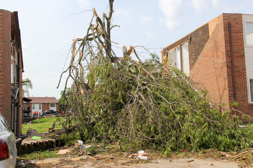 A tree that had its limbs knocked down by a tornado that struck Jefferson City in May 2019.