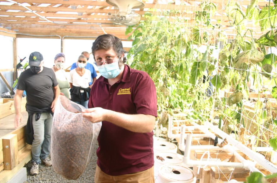 Marc Amonte shows off the soil-less medium for the dutch bucket system at Central State.