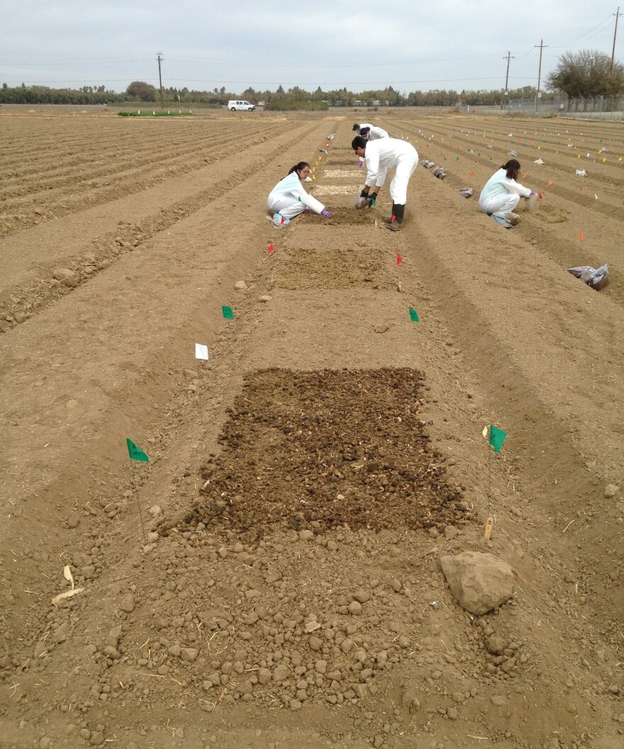 The scientists spread four kinds of raw manure on a field in Salinas, Calif., as part of an experiment to test how long strains of <em>E. coli</em> live in soil where leafy greens are grown.