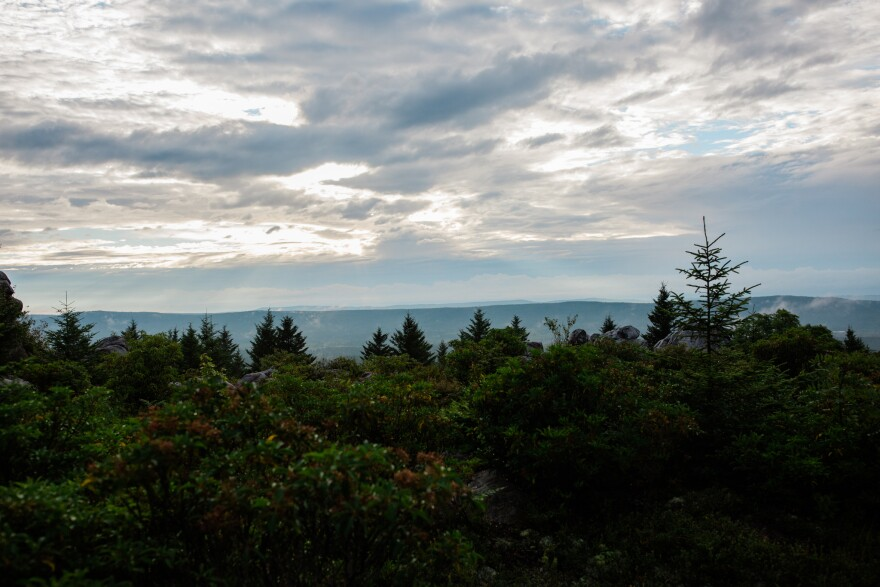 A view of the Dolly Sods Wilderness Area, which is part of the Monongahela National Forest in eastern West VIrginia.