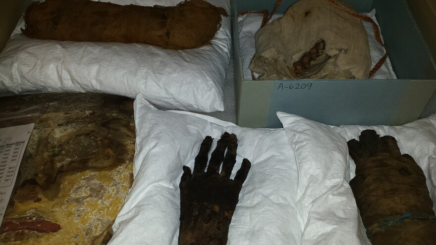 Mummified remains are carefully stored behind the scenes at the Boonshoft Museum of Discovery