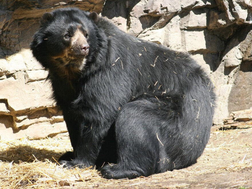 Bears in roadside zoos can suffer in the summer if they don't have the proper conditions, says Barbara J. King.