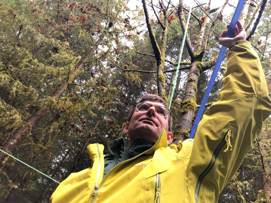 Greg Ettl, a forest ecologist for the University of Washington, shows off the tubing that will carry bigleaf maple sap down the hill using gravity at UW's Pack Forest.