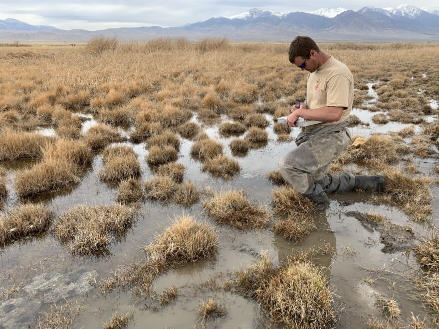 Jake Mecham counts spotted frog eggs in the remote West Desert of Utah. Thirsty Las Vegas has applied to use billions of gallons each year from the aquifer that feeds prime frog habitat.