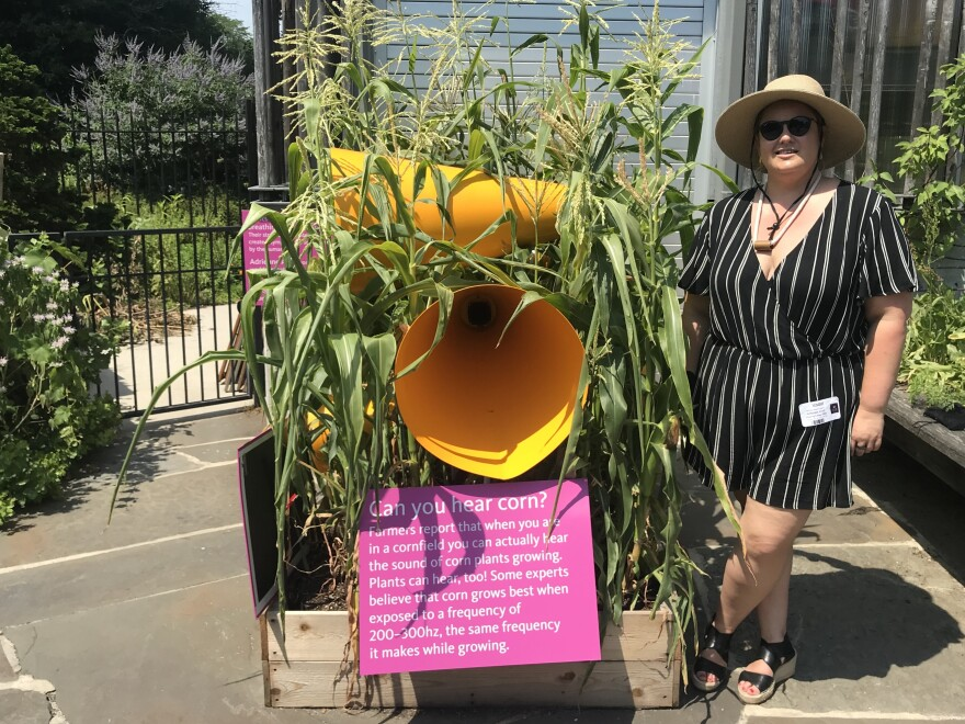 "Adrienne Adar, the artist behind ""Sonic Succulents,"" stands next to corn she planted in May at the Brooklyn Botanic Garden."