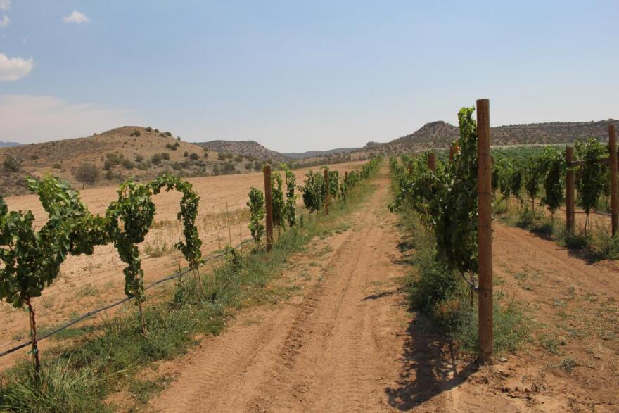 Wine grapes grow in Montezuma County's McElmo Canyon, a hotbed of water conflict according to deputy Dave Huhn.
