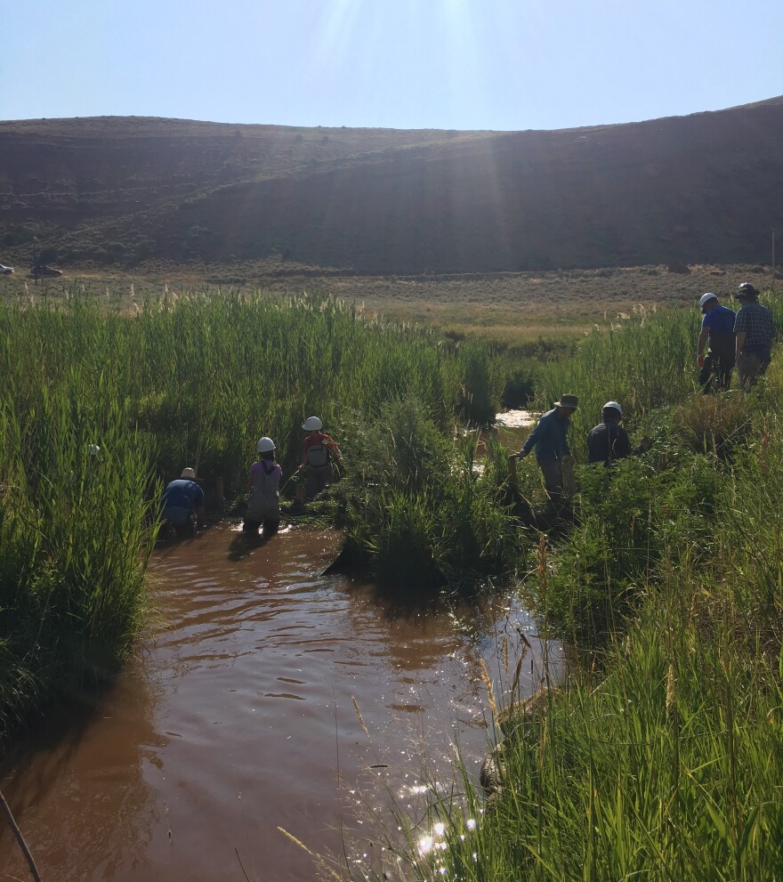 Conservationists and biologists taking a cue from the beaver's playbook while making a dam that acts like the rodent's habitat.