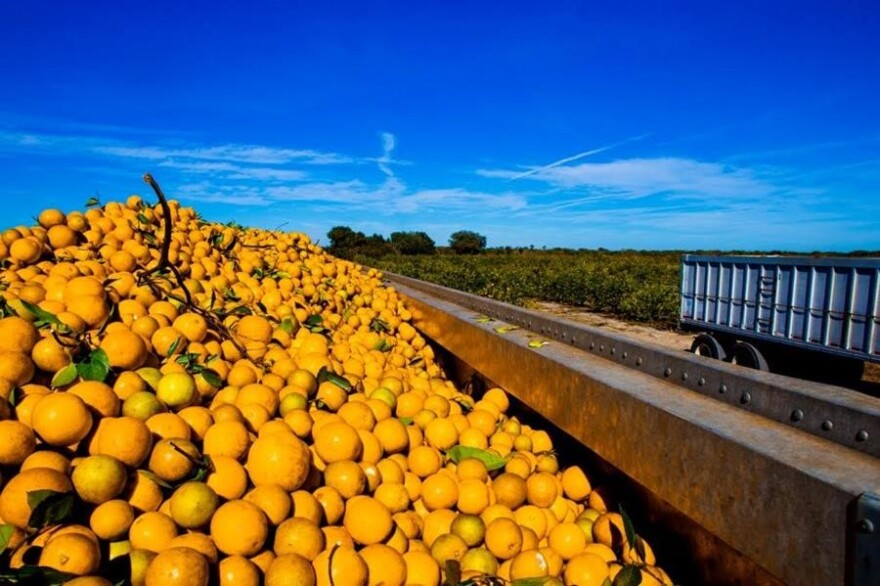 The Florida Citrus Commission is recommending more budget cuts as the industry deals with a devastating disease.