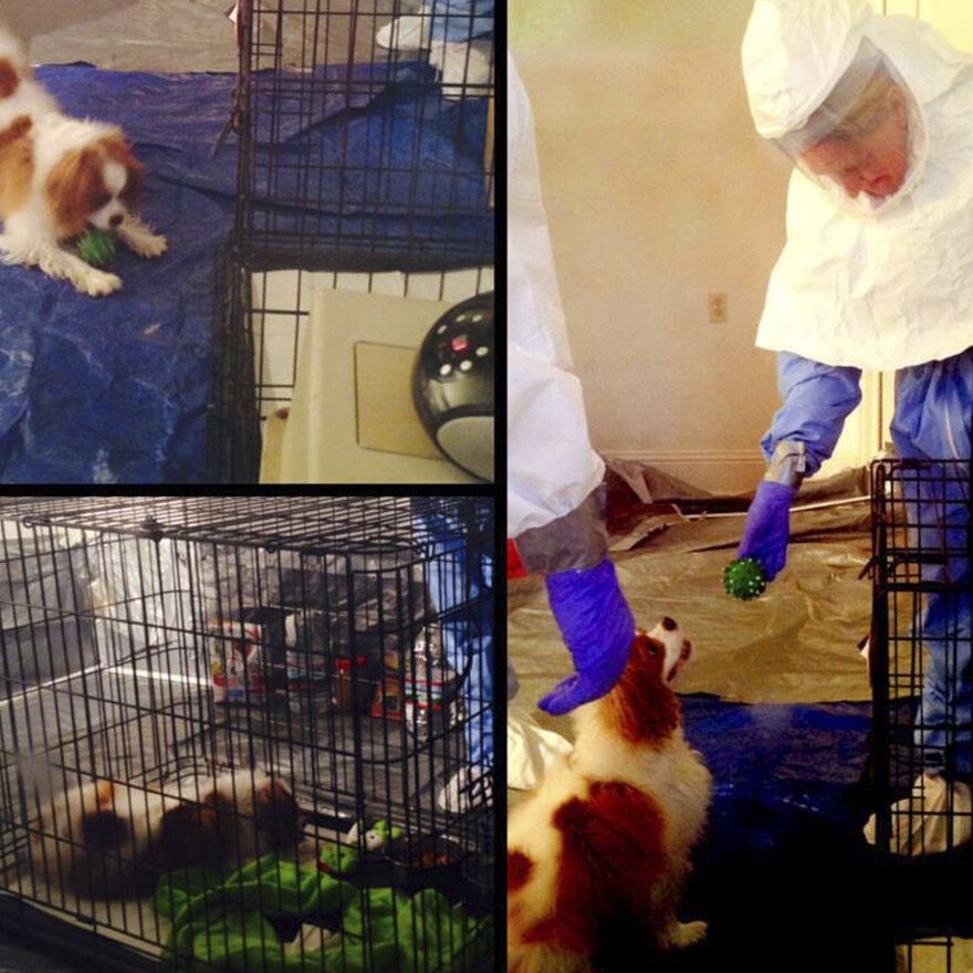 Bentley, the dog belonging to Ebola patient Nina Pham, is seen playing with health care workers wearing hazmat suits. Bentley has tested negative for the virus.
