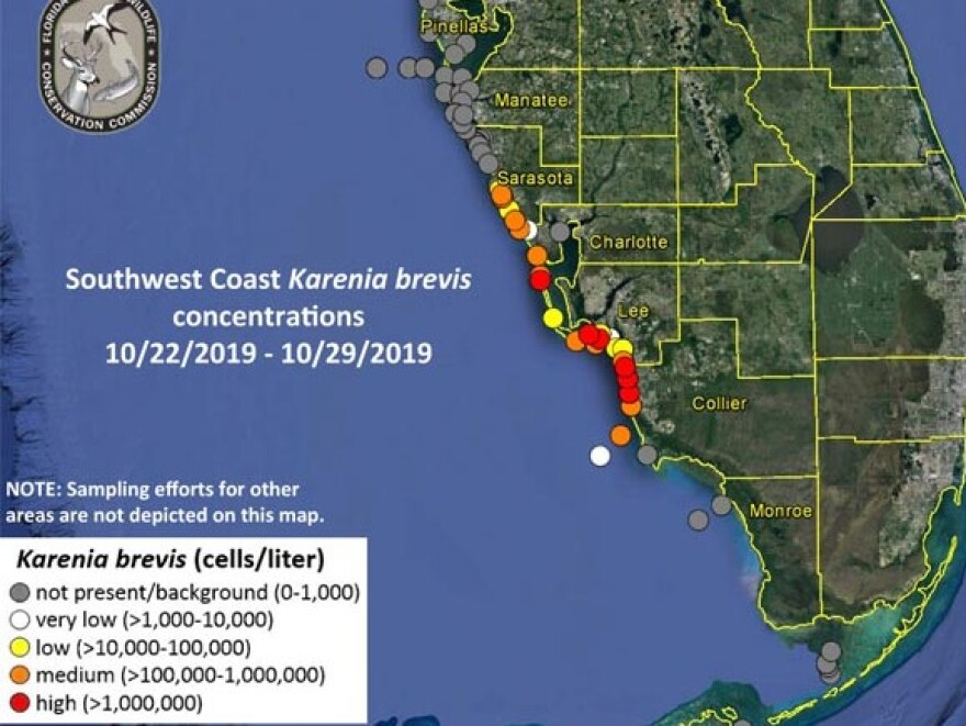 Scientists said they found medium concentrations of the organism in Sarasota County and very low concentrations off Pinellas.