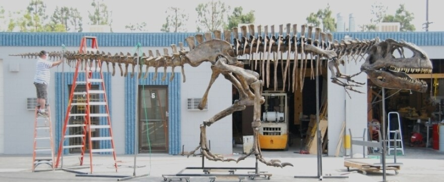 A worker assembles the tail of the Giganotosaurus skeleton at a warehouse in Chatsworth, Calif.