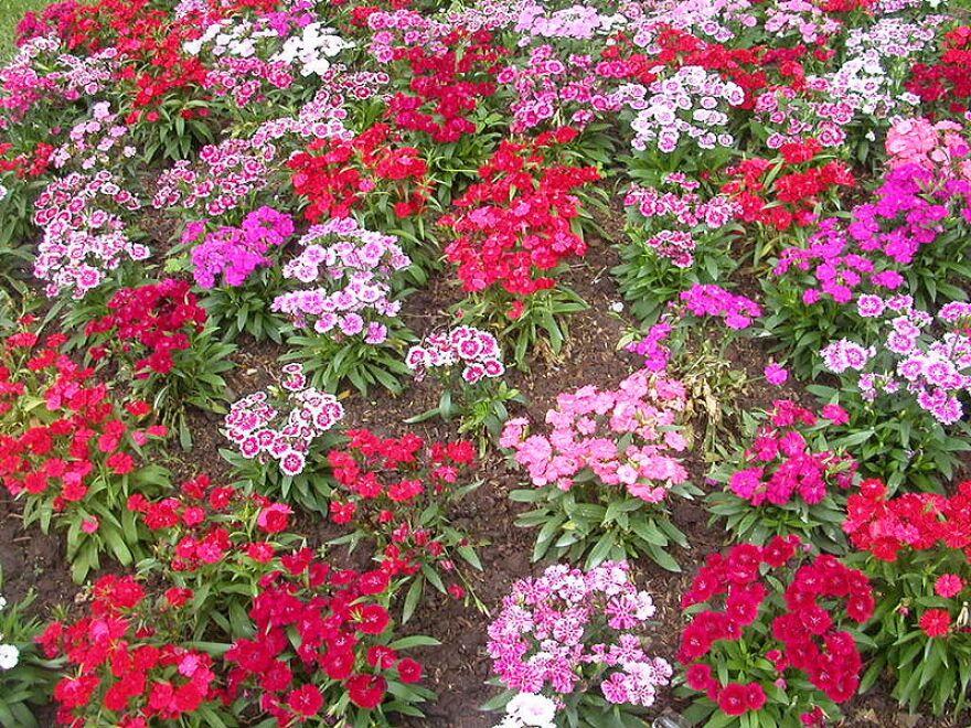 800px-Flower_garden_unknown_plant_1.jpg