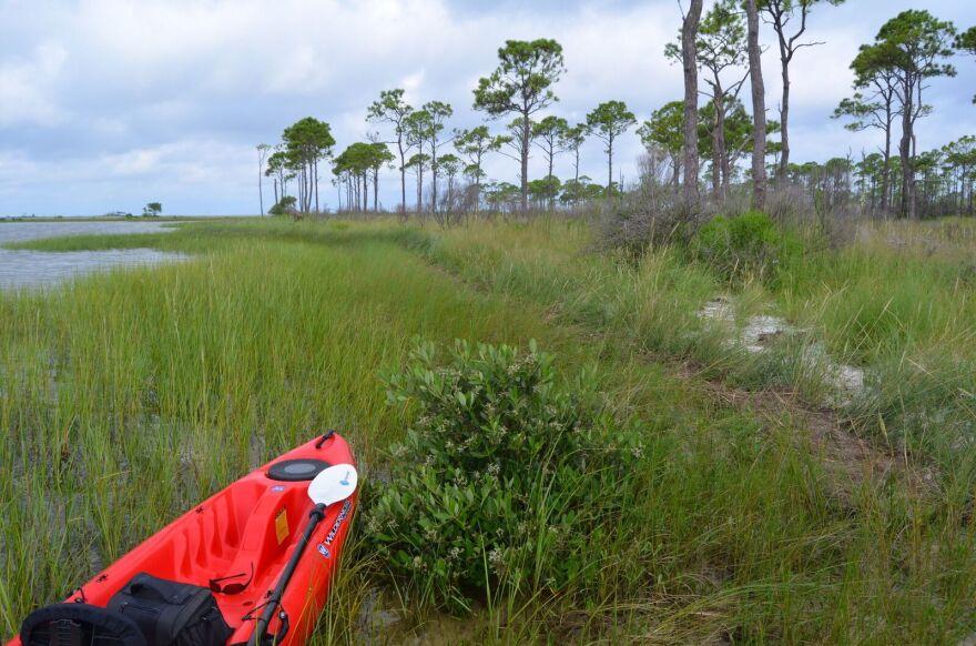 mangrove_cait_snyder.jpg