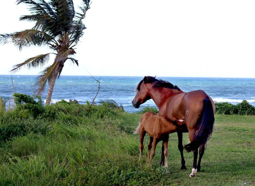 horse_prmaria.jpg