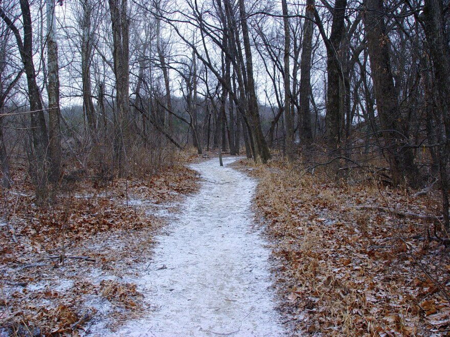 A snowy path cuts through fallen leaves in the woods.