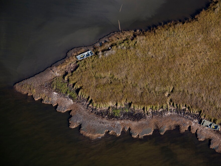 An aerial view of marshland that had been affected by the oil spill. The ridge around the edge is where the grass had been smothered and killed by the oil, leaving the exposed mud vulnerable to erosion.