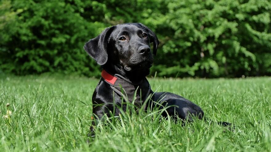 dog-1602840_960_720.jpg