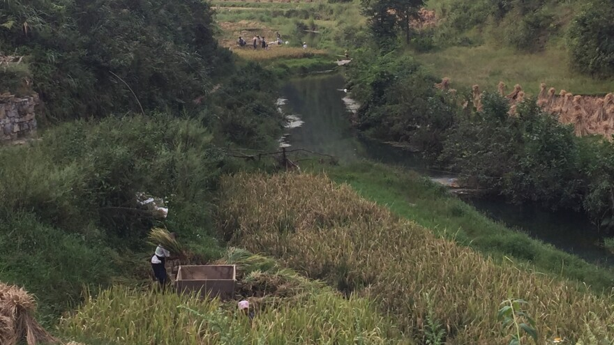 In Changba village in eastern Guizhou province, villagers thresh the autumn harvest of rice. They soon will be moved away to the city to live in public housing.