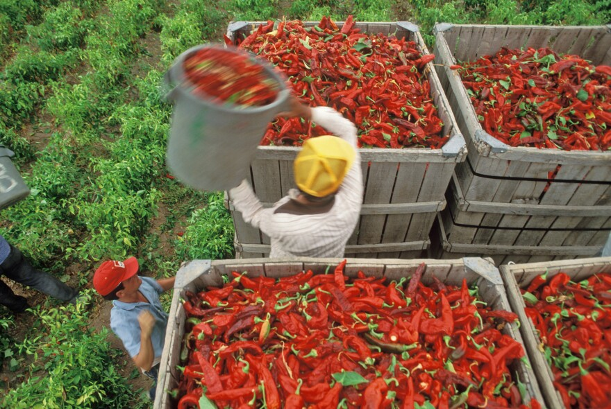 The California Pepper Commission says mechanical harvesters to pick hot and bell peppers could help solve labor shortage problems.