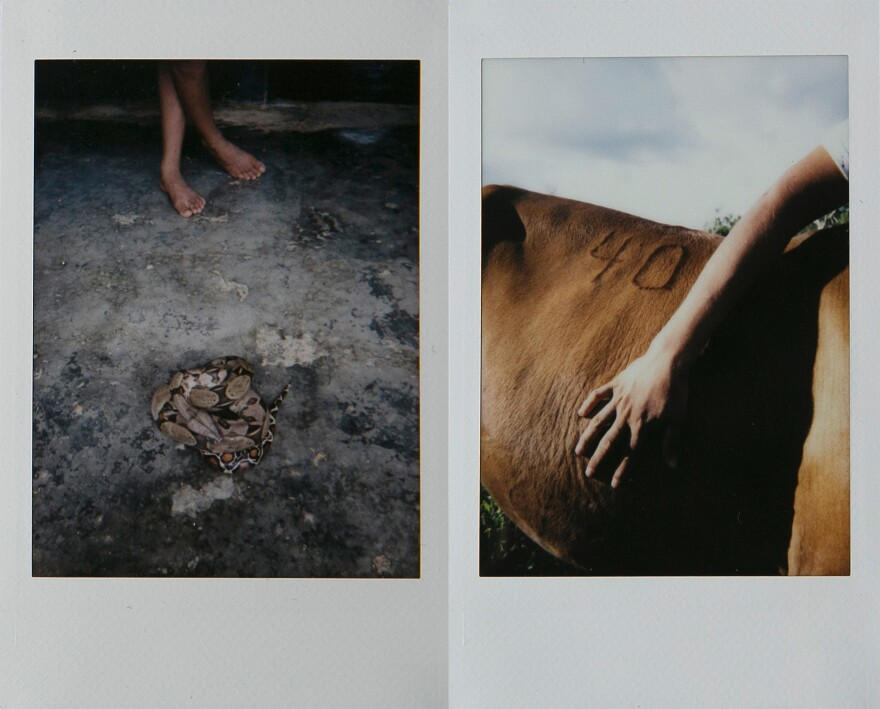 Left: A girl stands in front of a snake found in her house in Zabaleta. Families live surrounded by snakes, rats and all types of insects. Right: A man touches one of his horses outside his home by the Zabaleta River.