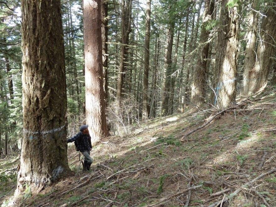 nedsbar_trees_marked_w_luke_ruediger.jpg