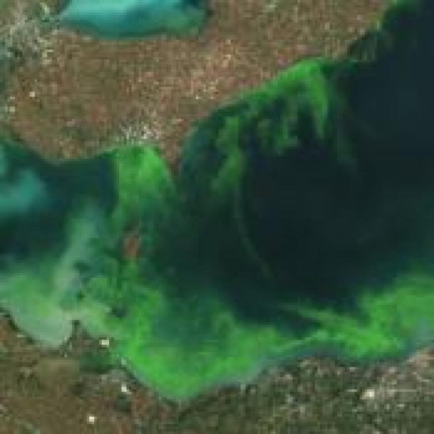 Lake Erie algae bloom