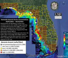 Red tide continues to bedevil the Gulf coast beaches