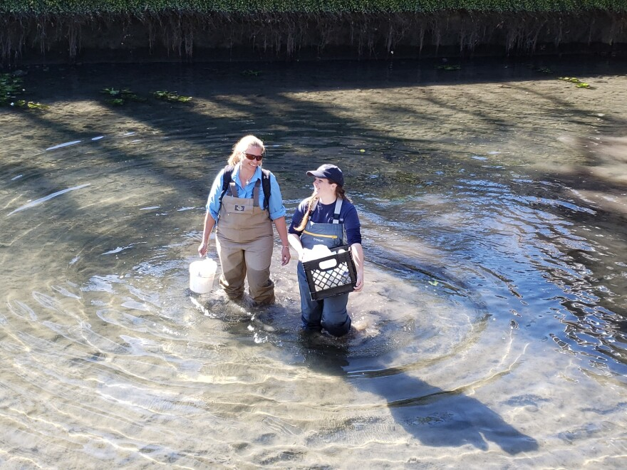 San Antonio River Authority staff work to collect samples of the water.