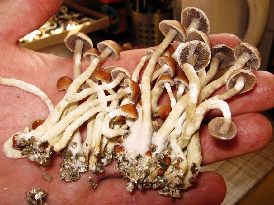 A growing body of research suggests psychedelic mushrooms may have therapeutic benefits for certain conditions. Now a movement seeks to decriminalize them.