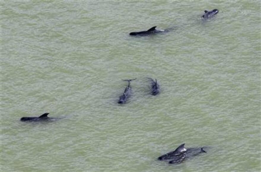 12-9-13_Whales.jpg