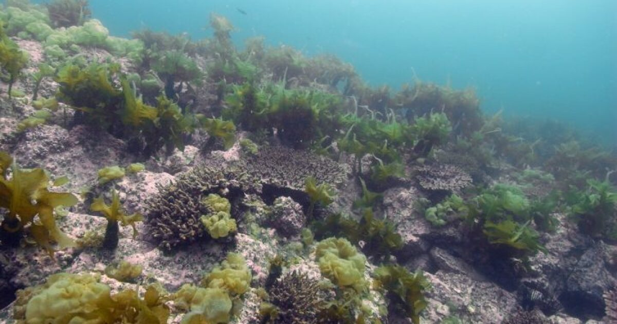 Maine Scientist: Climate Change Is Driving Corals To Cooler Waters. Will They Survive?
