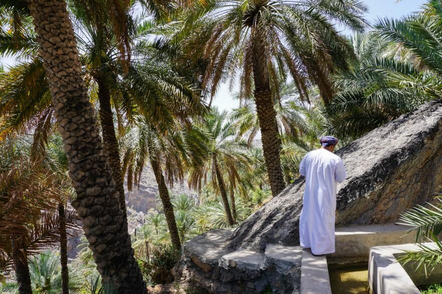 Haitham Al-Abri takes guests along the falaj and through date palms near Misfah Old House, a small village inn in Oman.