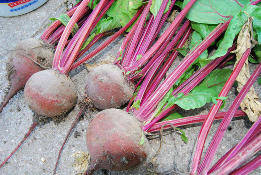 garden_vegetable_beets_flickr_creative_commons.png